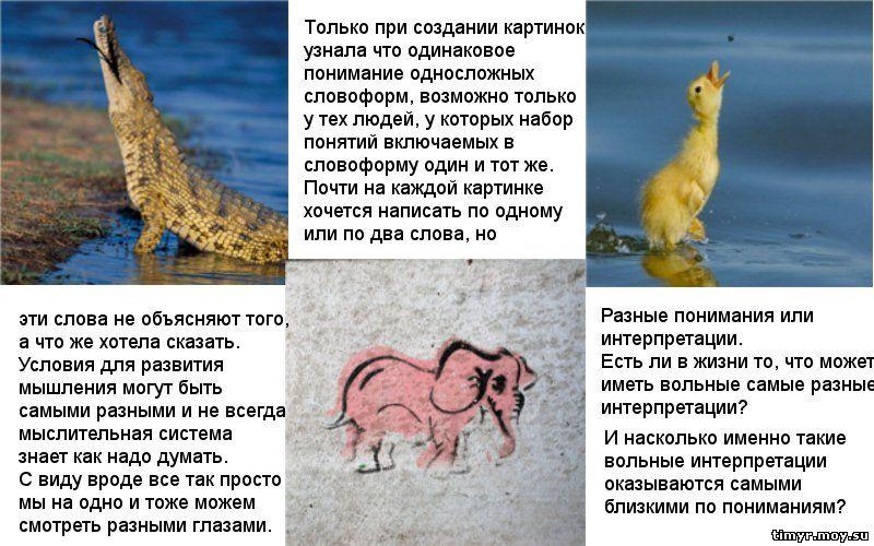 Познание Тимур человек цикл